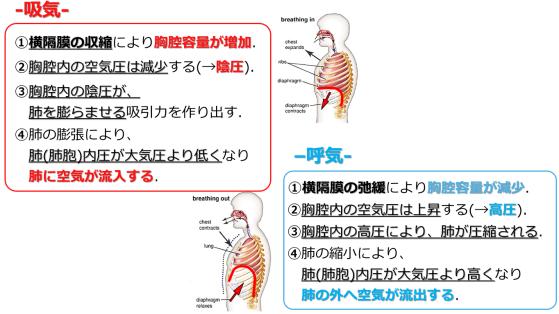 respiration mechanism