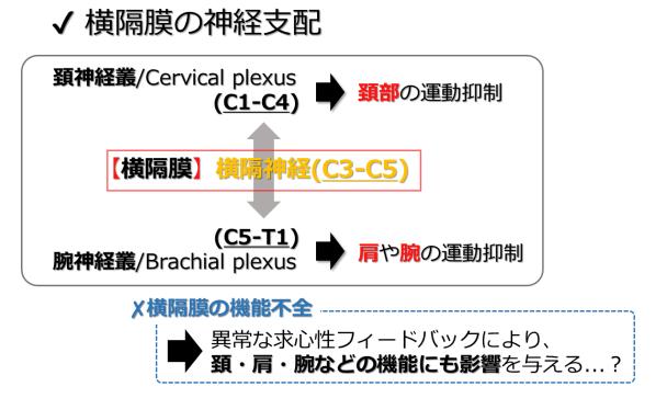 diaphragm motor control