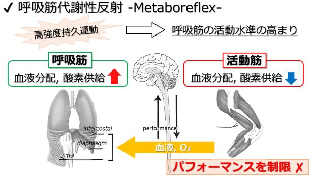 metaboreflex performance